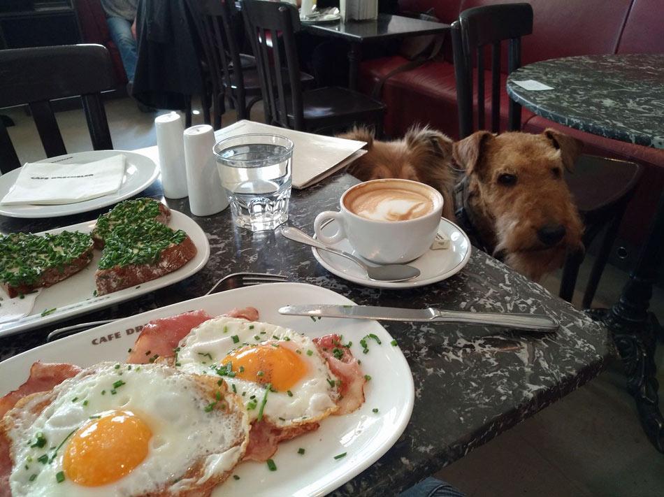 Guten Morgen von der Airedale Terrier und Collie Zucht , Wiener-Stern