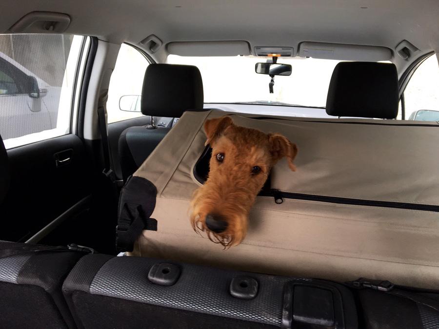 Airedale Terrier Austria