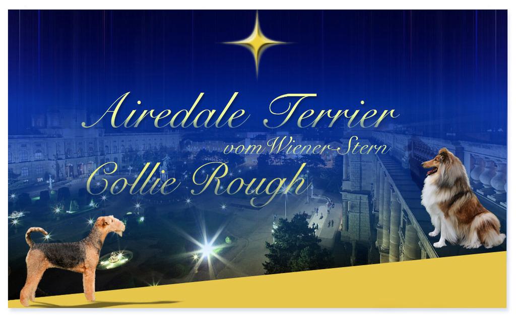 Airedale Terrier und Collie vom Wiener-Stern