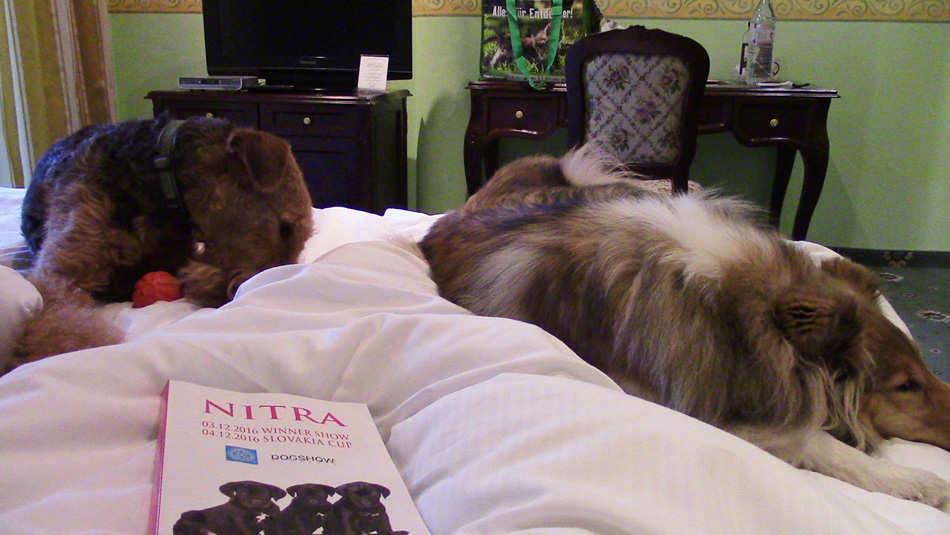 Airedale Terrier Mira Wien