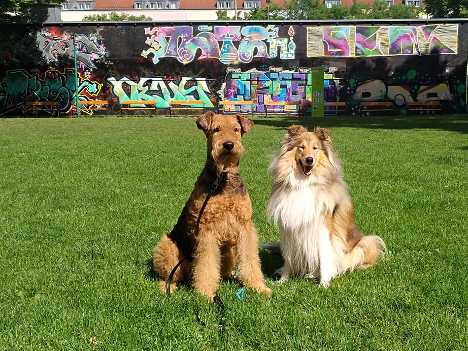 Airedale Terrier Basia, Collie Alisa