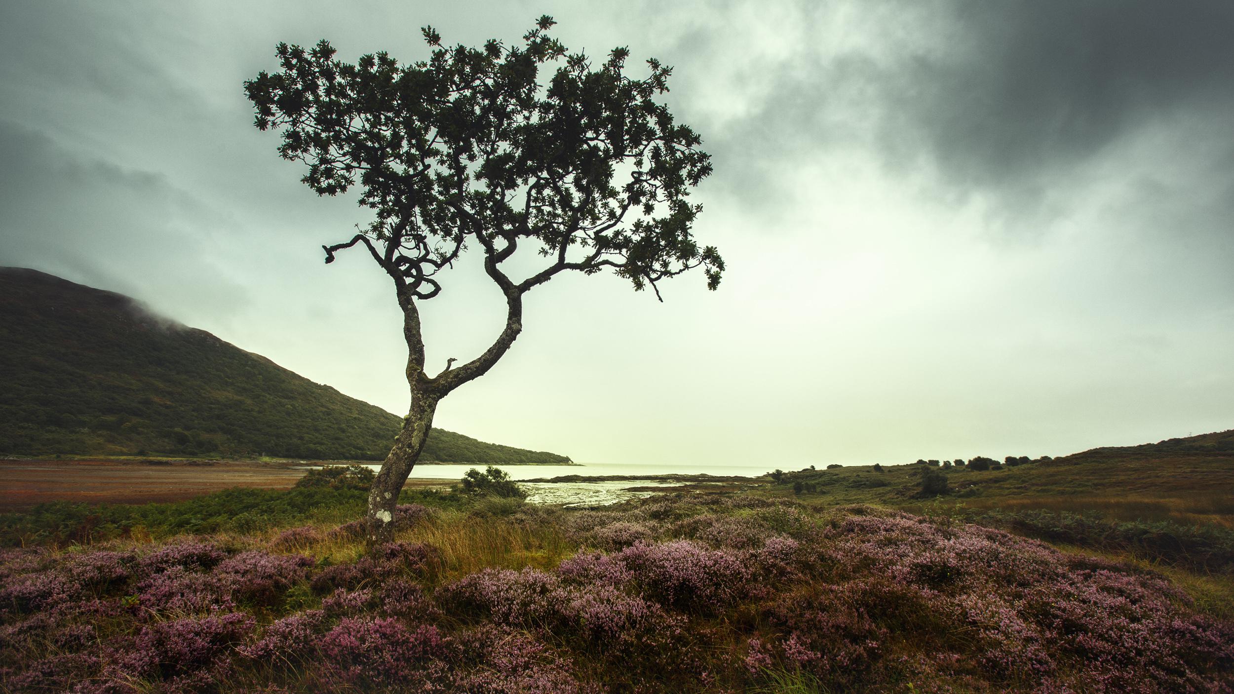 loch-tree1elb8.jpg