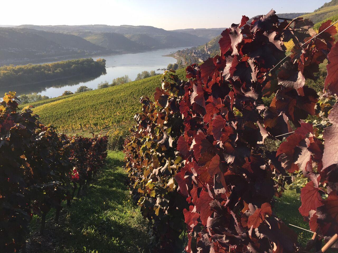 Blick auf die Weinberge in Lorch am Rhein (Bild: MMüsel)