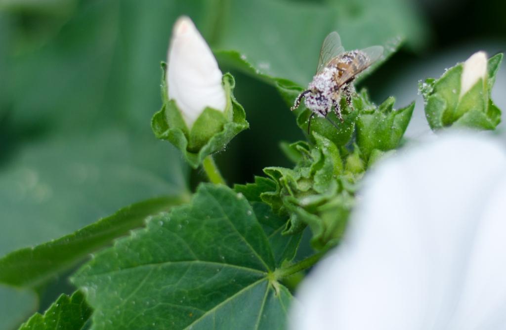 Insektenzeit - Makrozeit