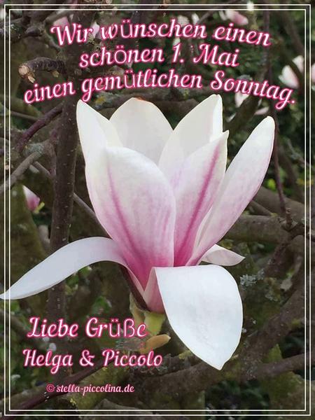 An den Beitrag angehängtes Bild: https://abload.de/img/magnolien08a9k78.jpg