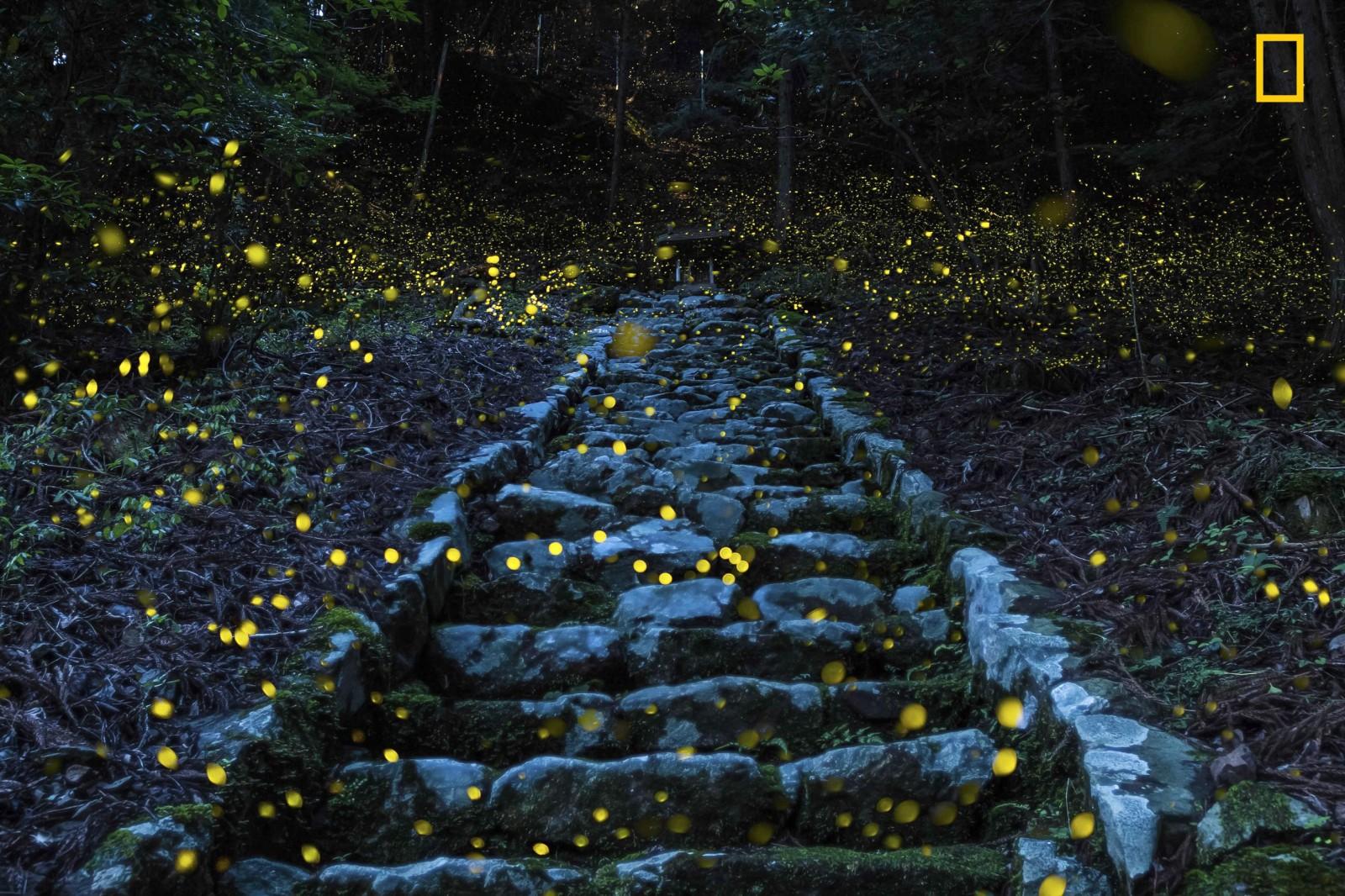 nature_lit_up2