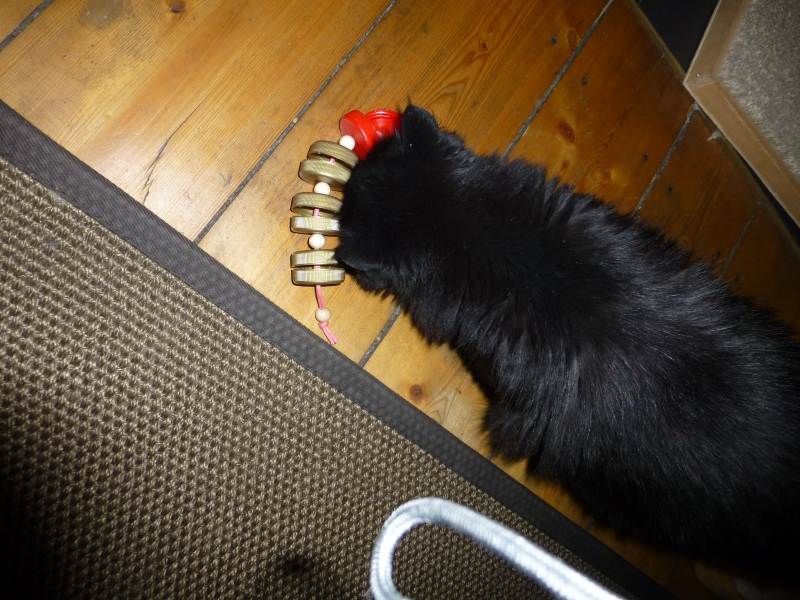 fummelspielzeug aus saftflaschenkappen katzen forum bergkatzen. Black Bedroom Furniture Sets. Home Design Ideas