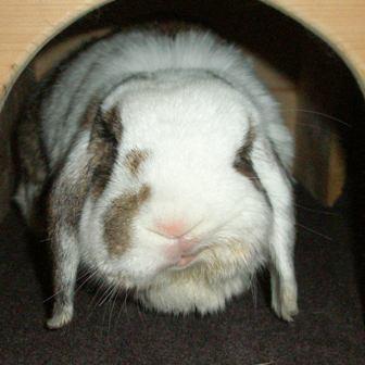 Kaninchen Schlaganfall