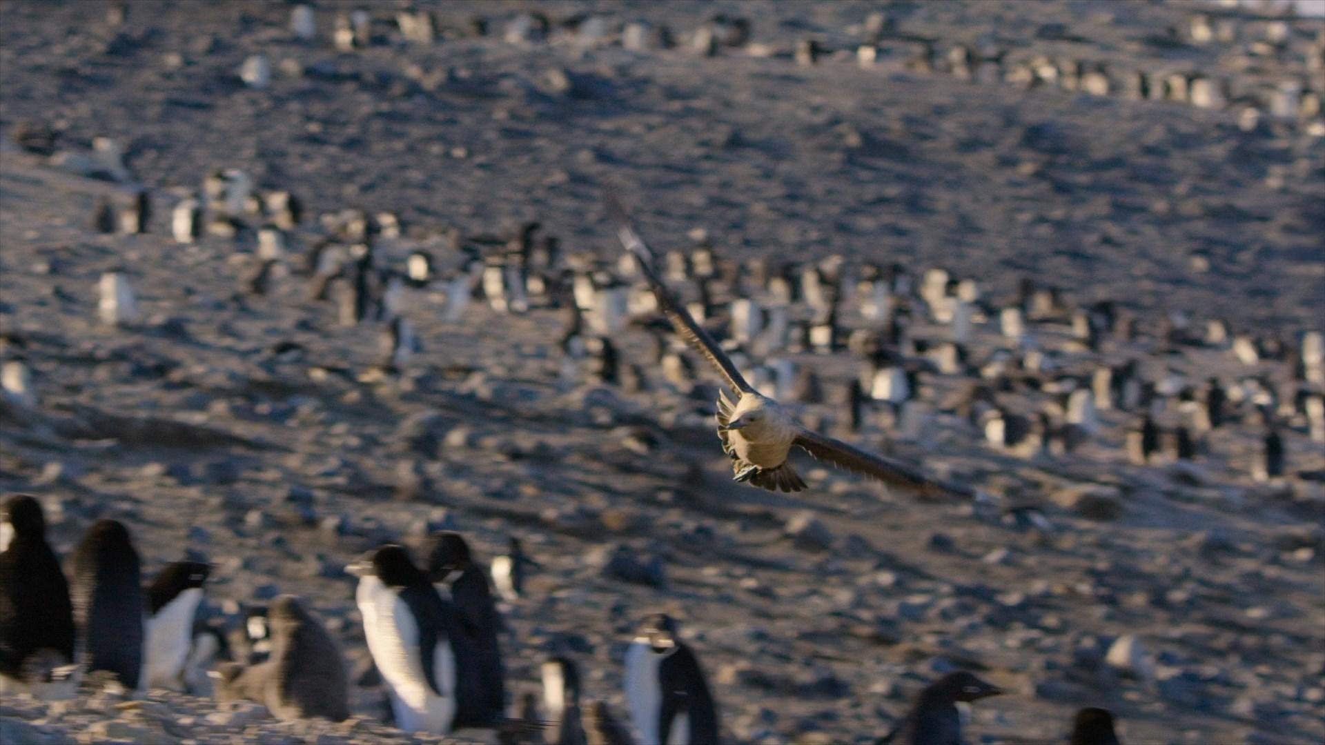 [Resim: penguins.2019.1080p.w9nept.jpg]