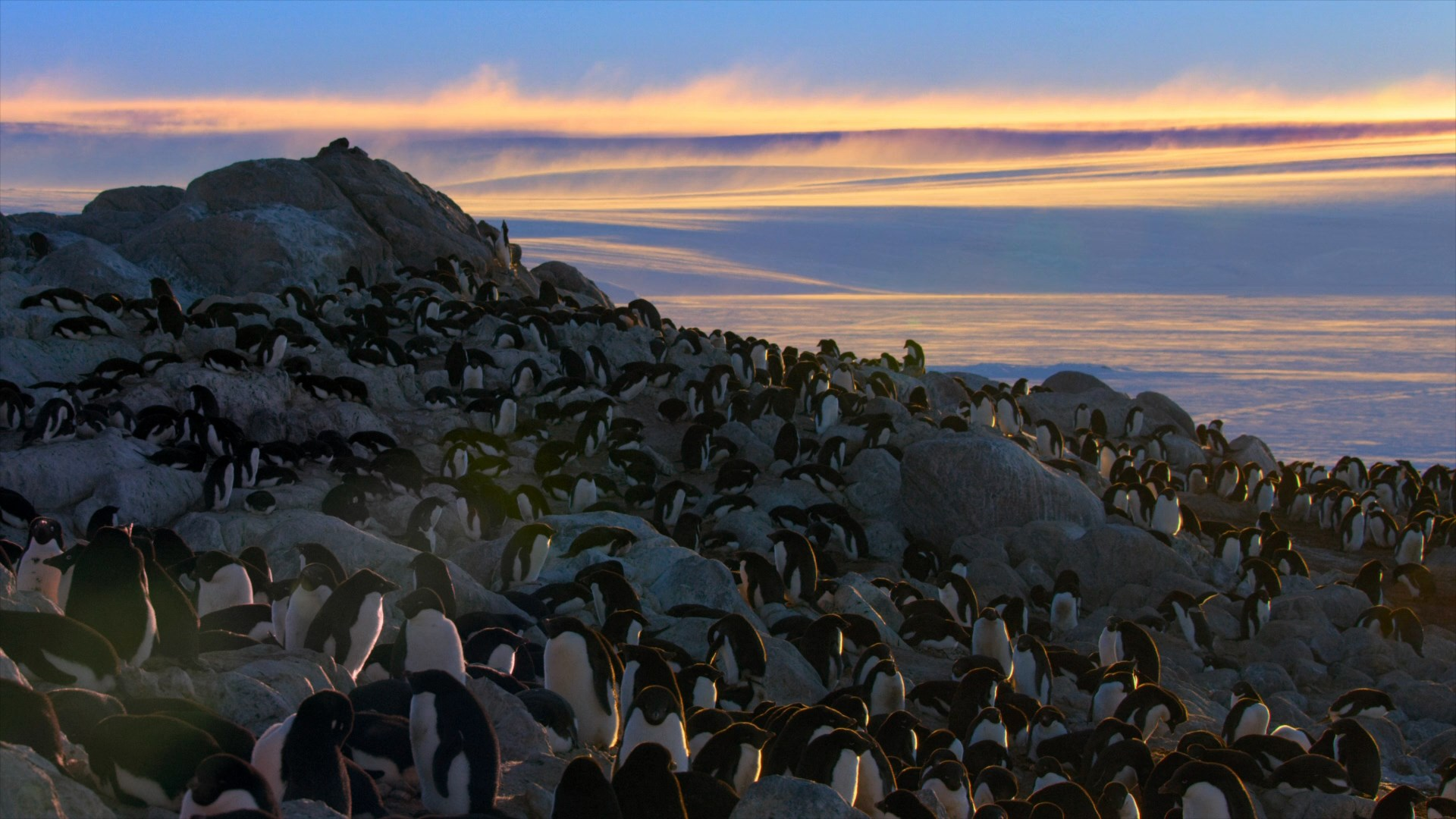 [Resim: penguins.2019.1080p.wbxee7.jpg]