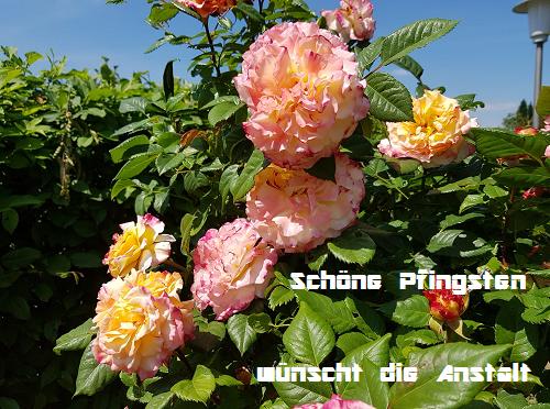 Schöne Pfingsten Pfingstenwek97