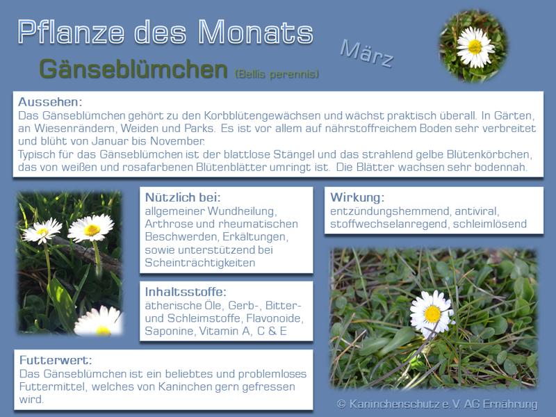 AGE & Lola: Die Pflanze des Monats - Zusammenfassung