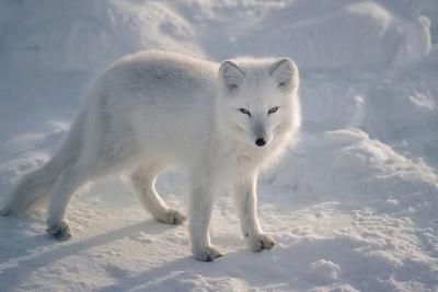 [Updates] Hozuki Kano Polarfuchsebjy9