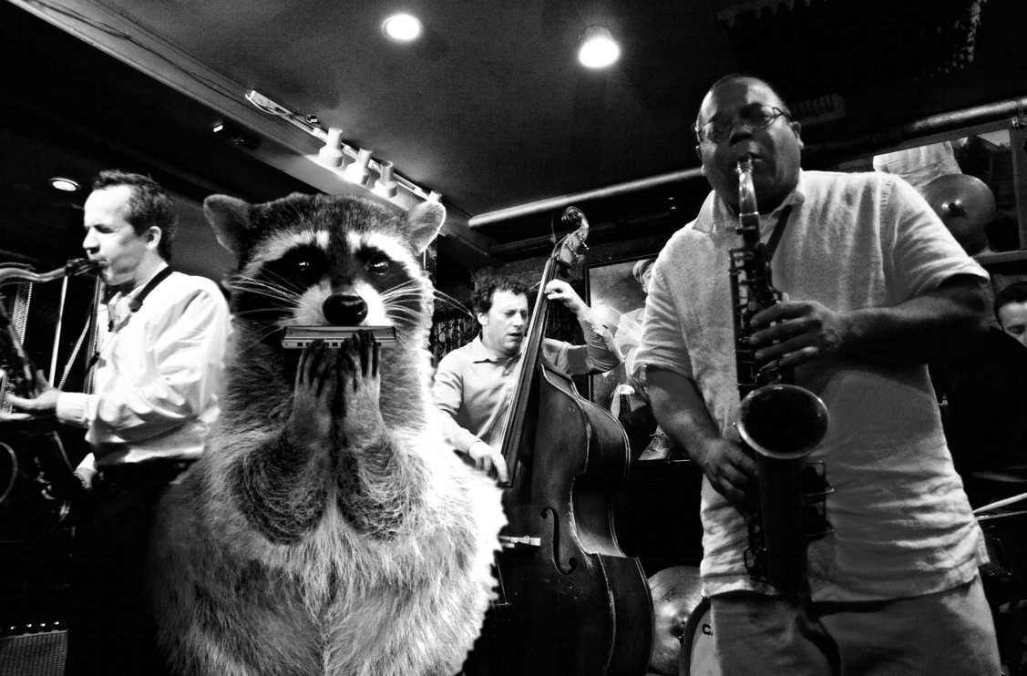 raccoon_band