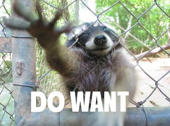 raccoon_do_want