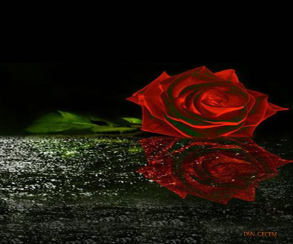 romantikveduygusalgranmkvl.jpg