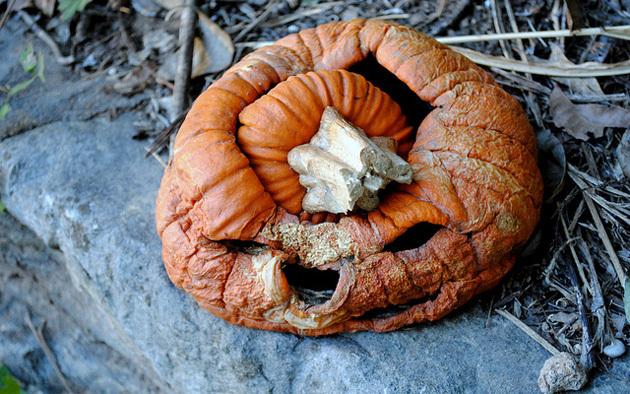 rotten-pumpkin-630gwsge.jpg