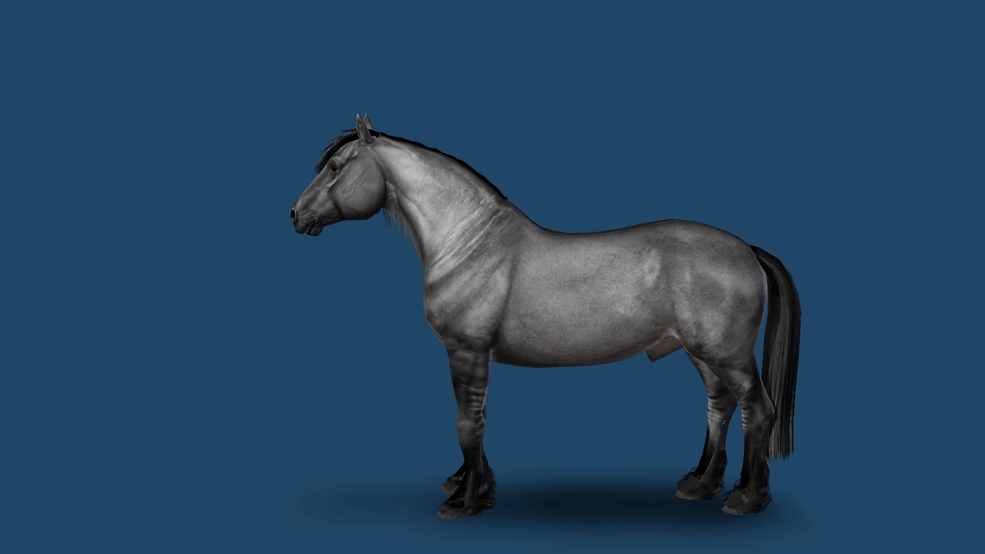 Horse leg markingsdaruma fields saddlery saddle