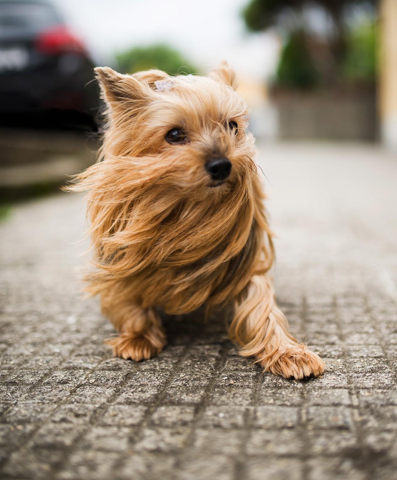 small_dog1