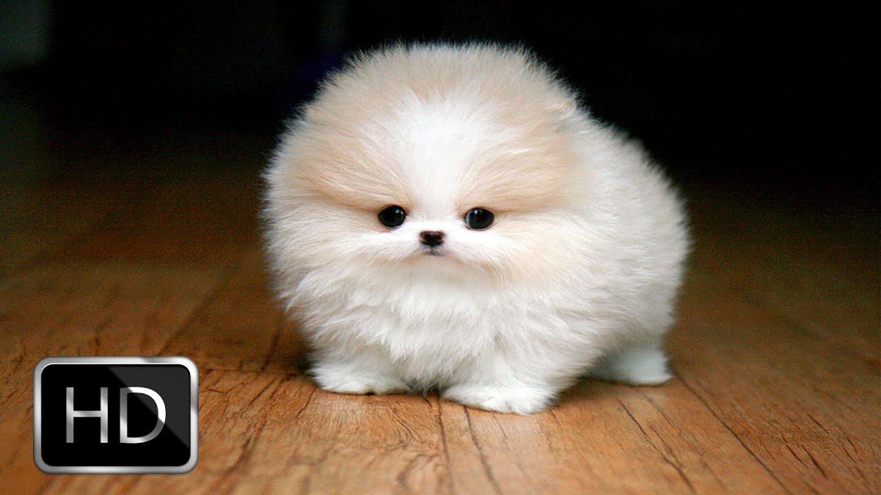 small_dog2