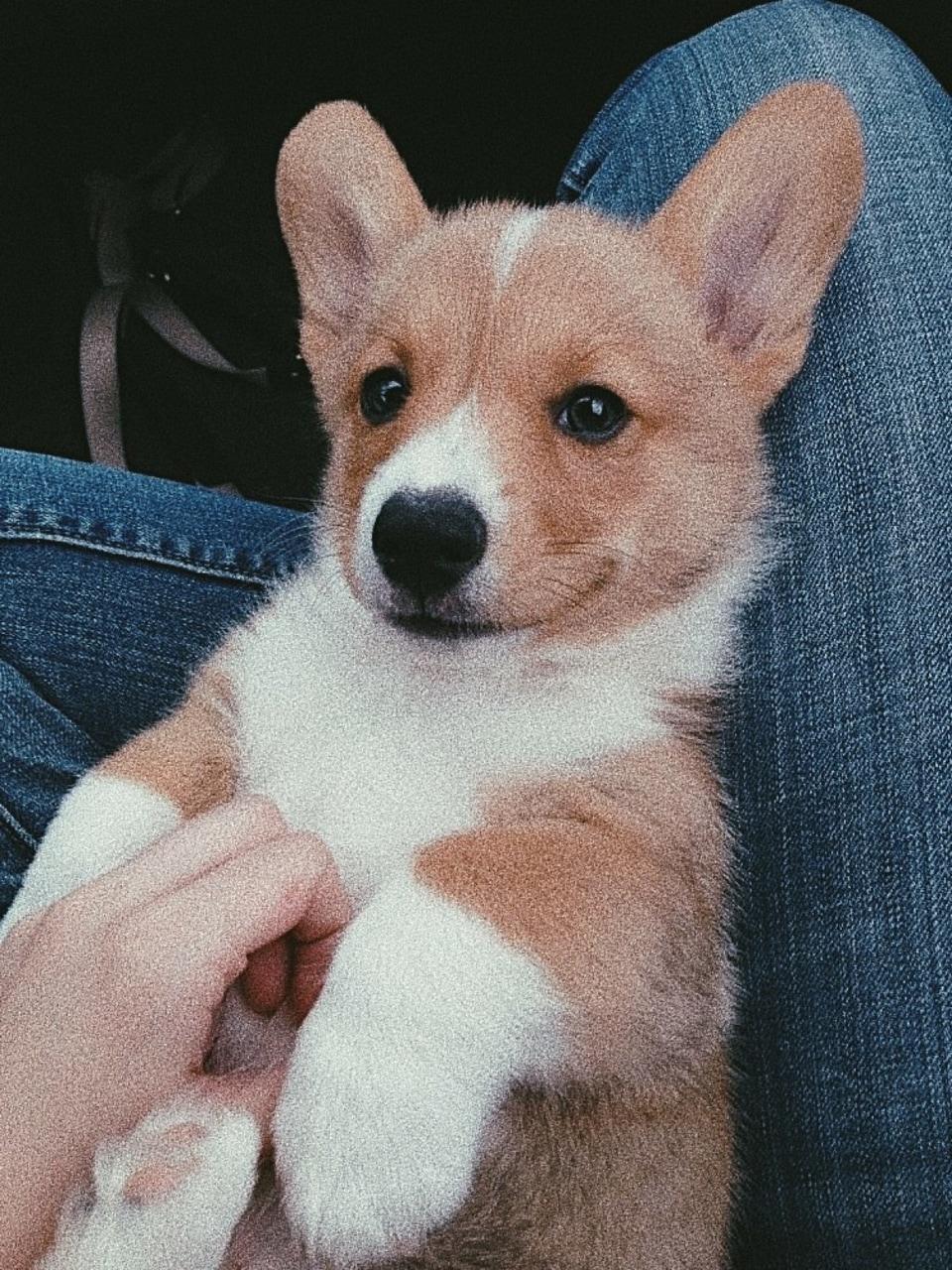 small_dog3