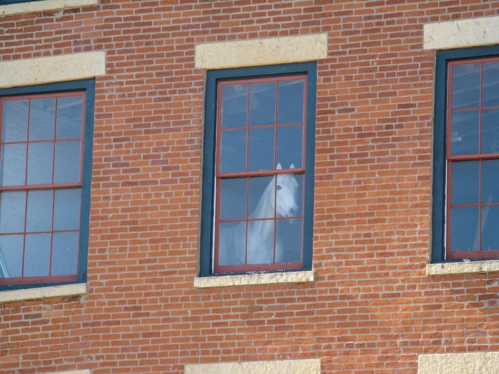 soon_horse