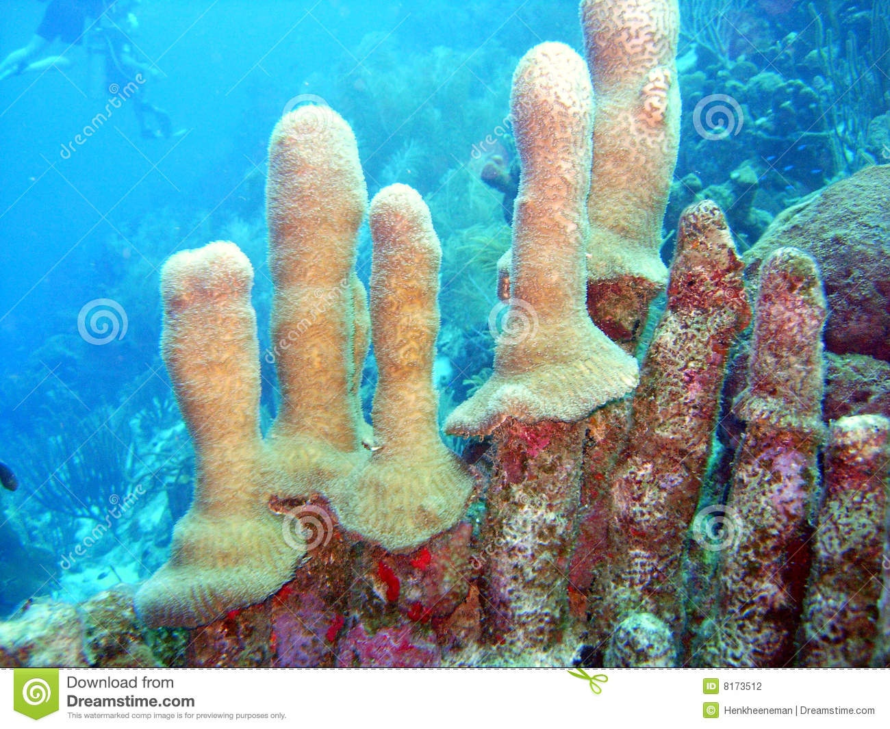 strange_coral1