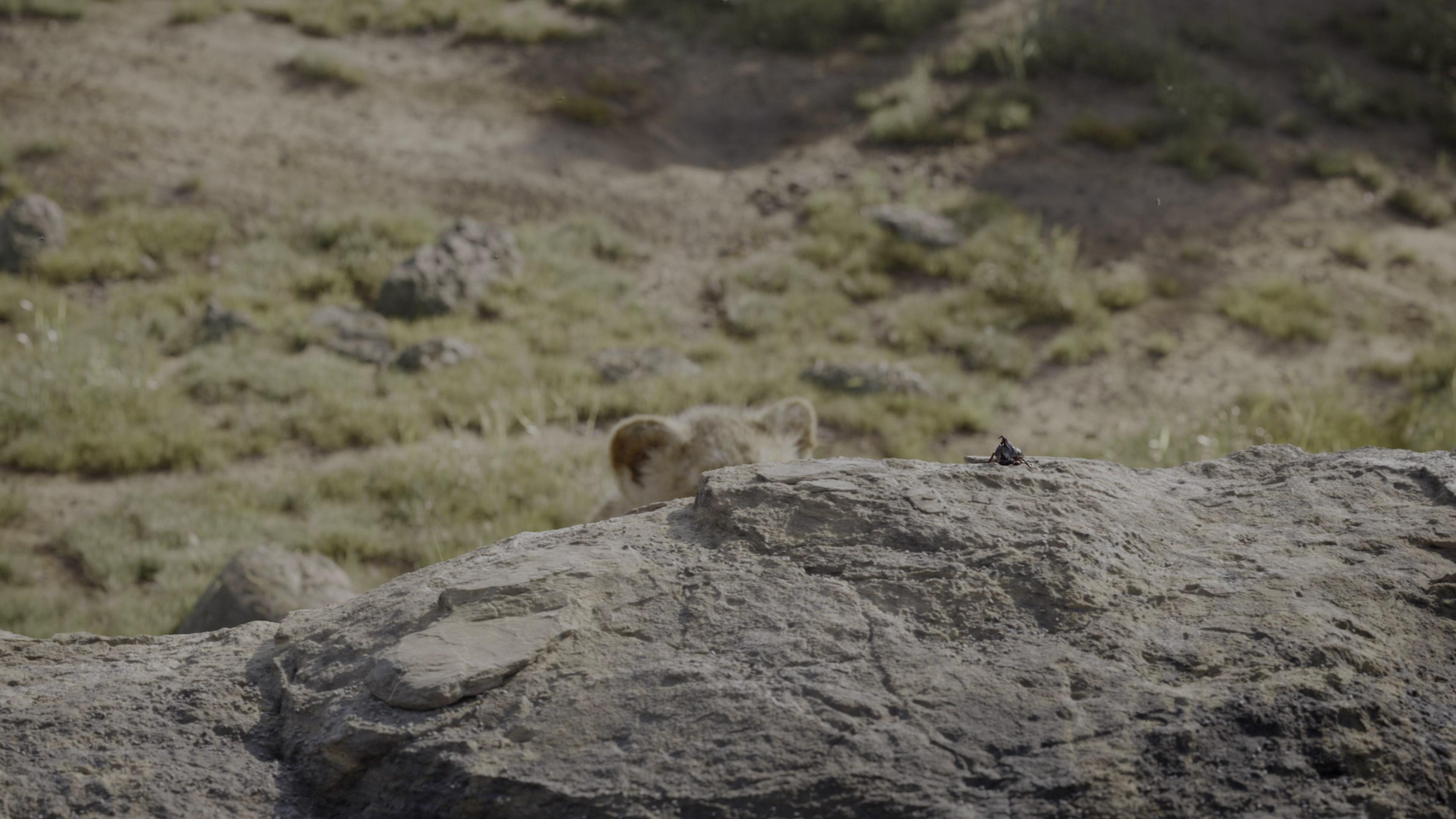 [Resim: the.lion.king.2019.212kj53.jpg]