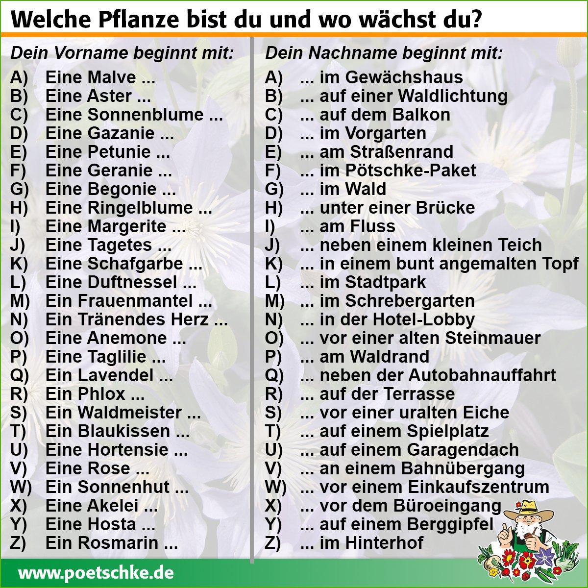 Welche Pflanze bist du