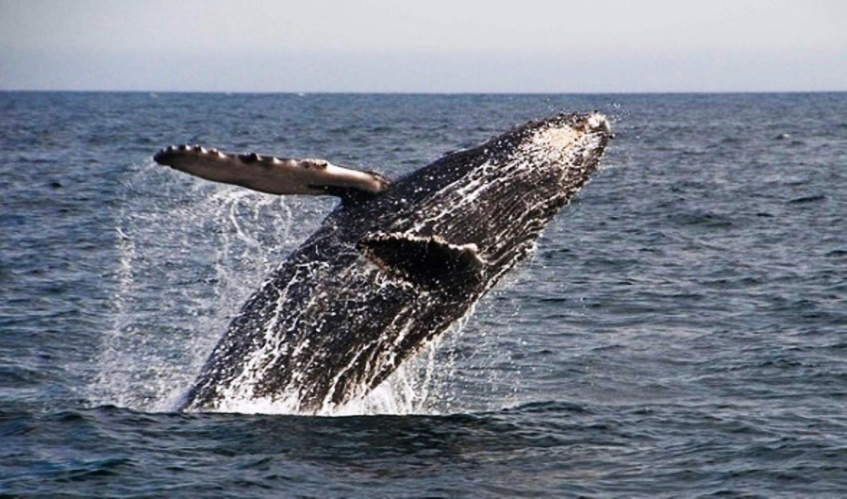 https://abload.de/img/whalewatchingatbahiam0vqgs.jpg