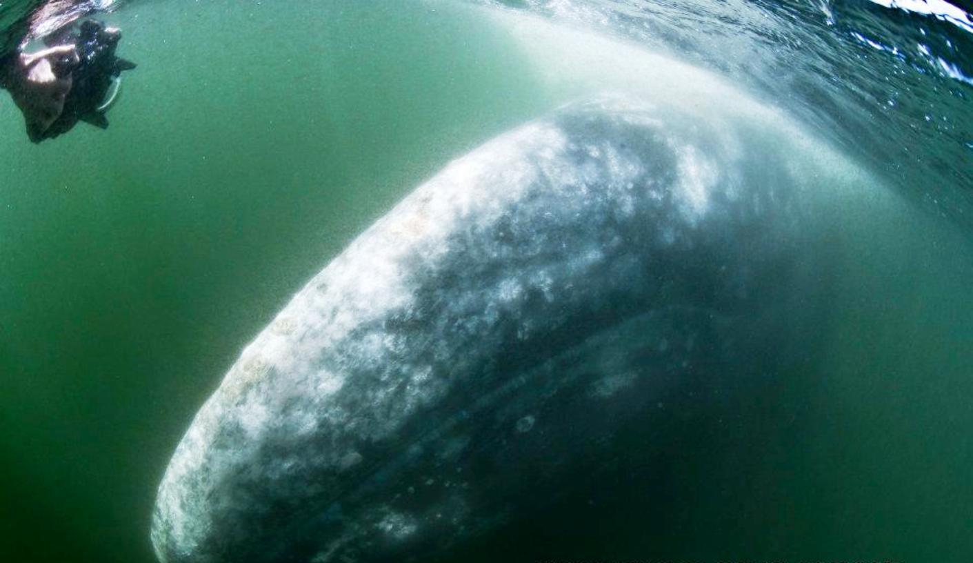 https://abload.de/img/whalewatchingatbahiambbjqk.jpg