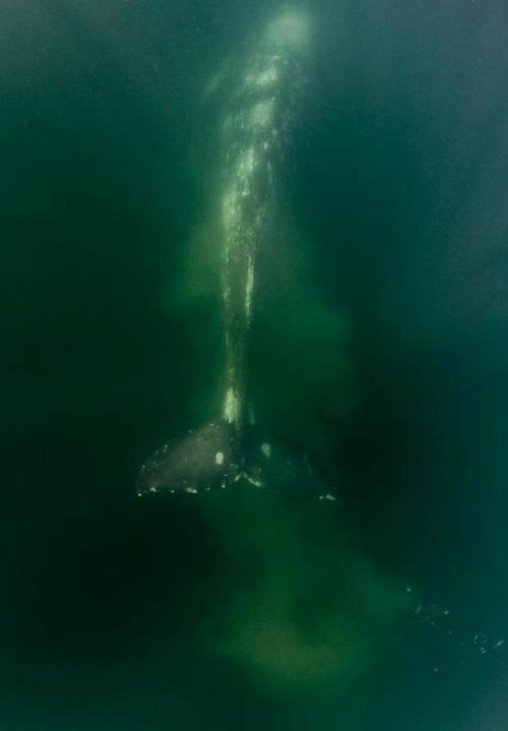 https://abload.de/img/whalewatchingatbahiamdjs5e.jpg