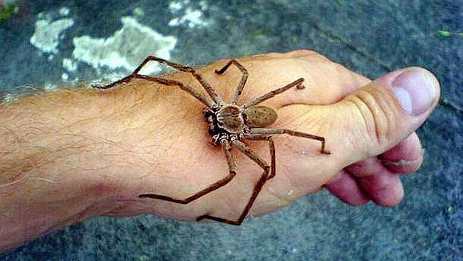 Australia man's kids ask if they should make breakfast for spiders.    ResetEra