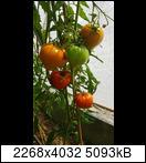 [Bild: 20200727_121925nsjh2.jpg]