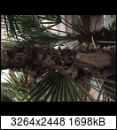 e73337f1-87b6-4250-b7glmp.jpeg