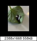 [Bild: mobile.39zwj4x.jpeg]