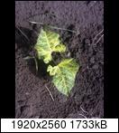 p1028_12-06-162tu9o.jpg