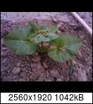 p1440_09-06-16o5jhe.jpg