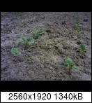 p1443_09-06-167pkt4.jpg