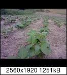 p173401_21-06-16jeui5.jpg