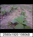 p173402_21-06-169vu3o.jpg