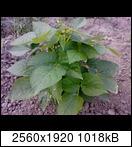 p173502_21-06-16z3ukj.jpg