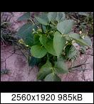 p173601_21-06-1641uox.jpg