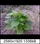 p1736_21-06-16brug7.jpg