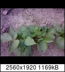 p173802_21-06-16r9ue2.jpg