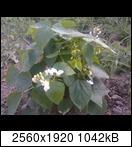p184501_26-06-16tvjke.jpg