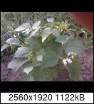p184502_26-06-165bk1q.jpg