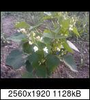 p1846_26-06-16cdkt4.jpg
