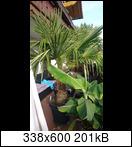 palme1idqy7.jpg