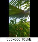 palme22jfr37.jpg